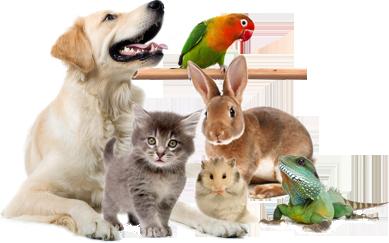 Ветеринарные клиники Минска