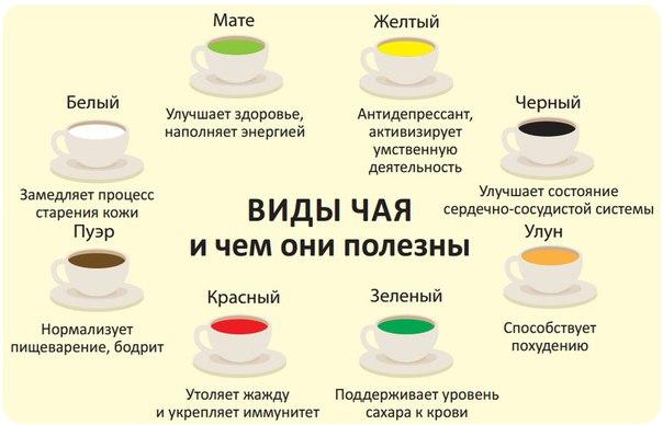 виды и свойства чая. польза чая