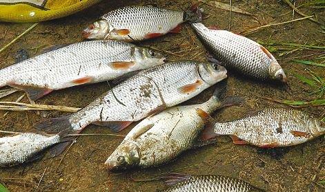 Как ловить рыбу в начале лета?