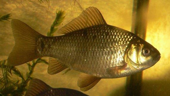 Куда исчезает рыба и что такое бесклевье?