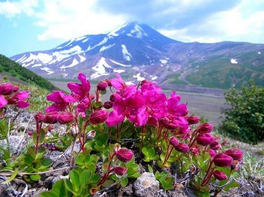 Природные парки Камчатки.