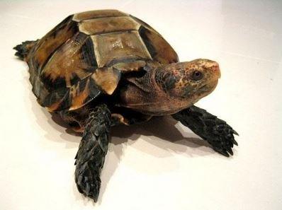 Стоит завести черепаху?