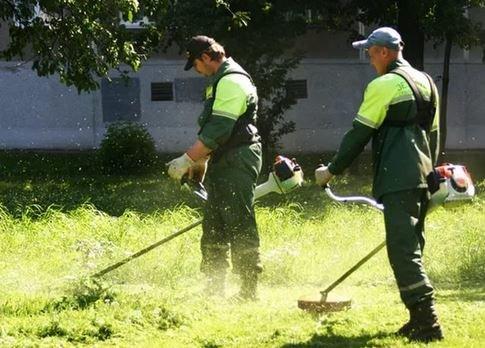 оплачиваемые общественные работы