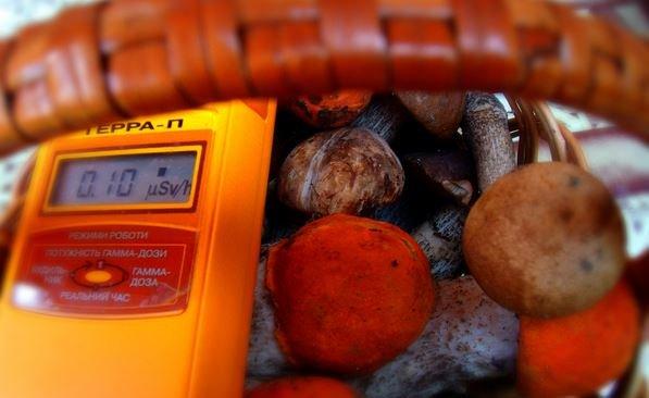 радиоактивные грибы в Беларуси