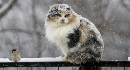 На этой неделе в Беларуси ожидается снег
