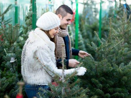 В Минске 22 декабря откроются елочные базары