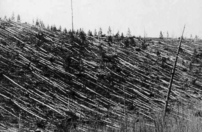 поваленные деревья от Тунгусского метеорита