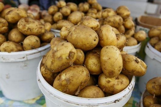 цена картофель польша