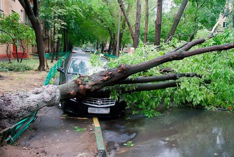 В Беларуси более 700 населенных пунктов оказались обесточены из-за непогоды