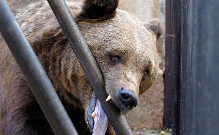 нападение медведей на людей, деревни, беларусь