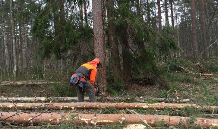 В Могилевской области мужчина погиб при заготовке леса