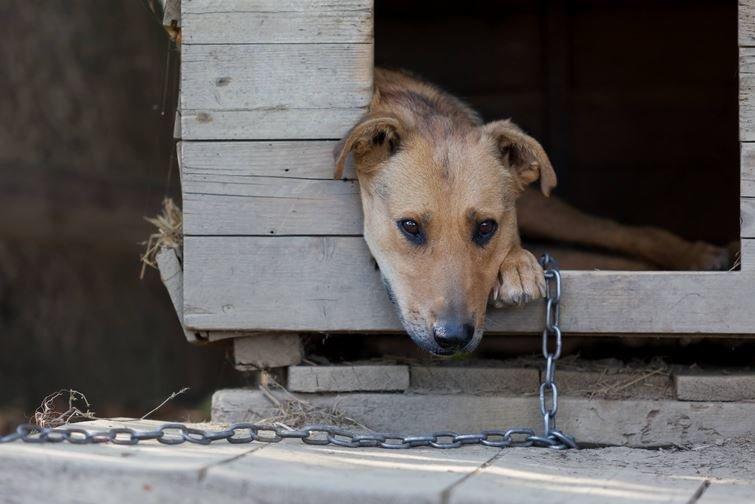 жестокое обращение с животным, повлекшем его гибель