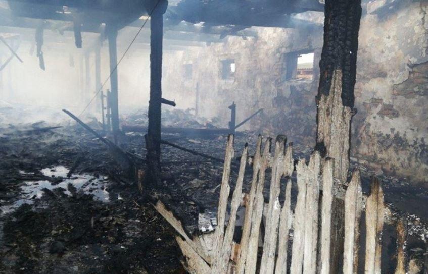 пожар, телятник, возгорание, столин, беларусь, новости, сводка