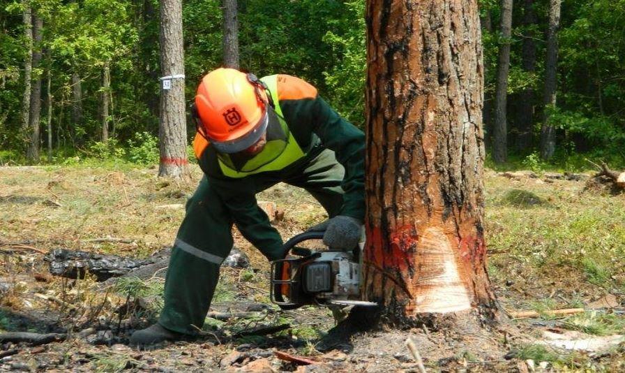 вальщик леса, трагедия, дерево упало, глубокский район