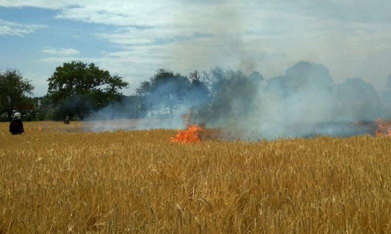 пшеница, поле, огонь, уборка урожая, пожар, тушение, беларусь