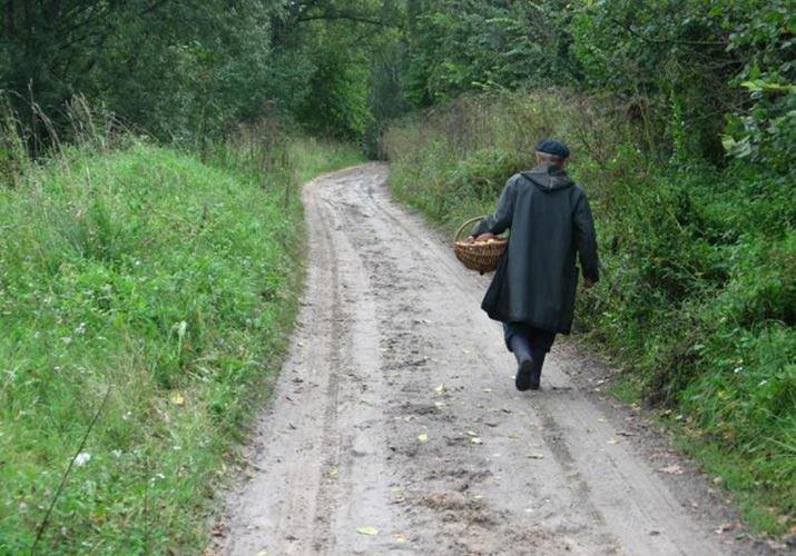 В Белыничском районе нашли заблудившихся пенсионеров