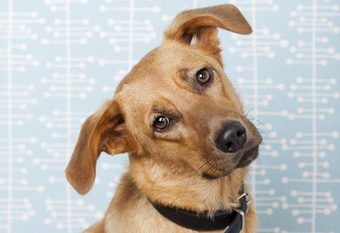 минск, лебяжий, повешенная собака, дети, ветеринар, мвд, расследование
