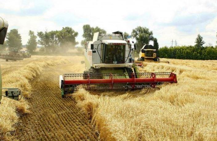 Лукашенко удивился количеству собранного зерна в Украине