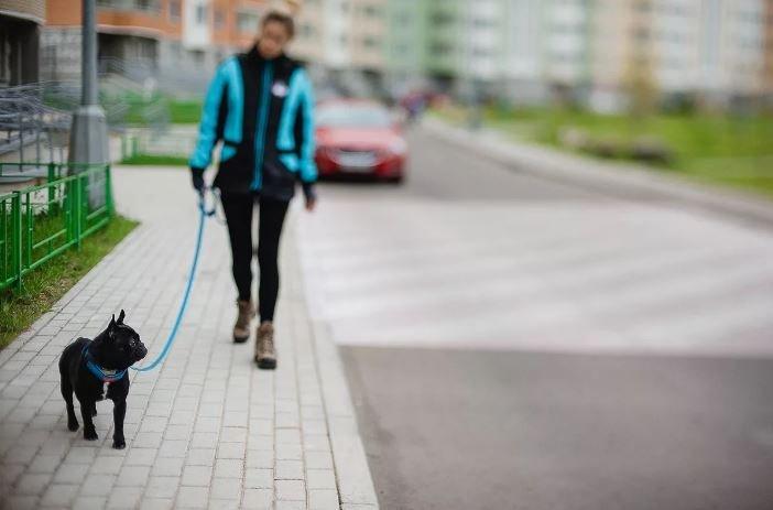 Минчанин украл собаку после отказа хозяйки продать ее
