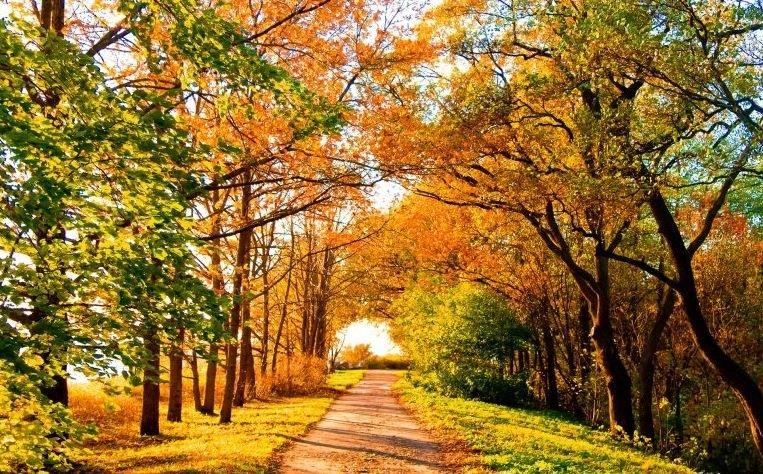 4 ноября в Беларуси будет до +18°С