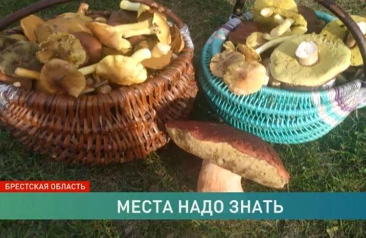 В Пружанском районе нашли гигантский боровик с метровой шляпой