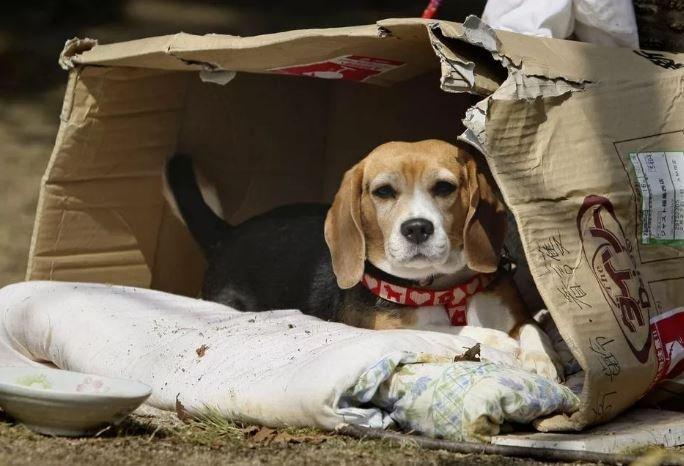 В Минске появился интернет-сервис для поиска пропавших животных