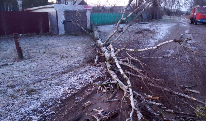 В Беларуси без света остались 239 населенных пунктов