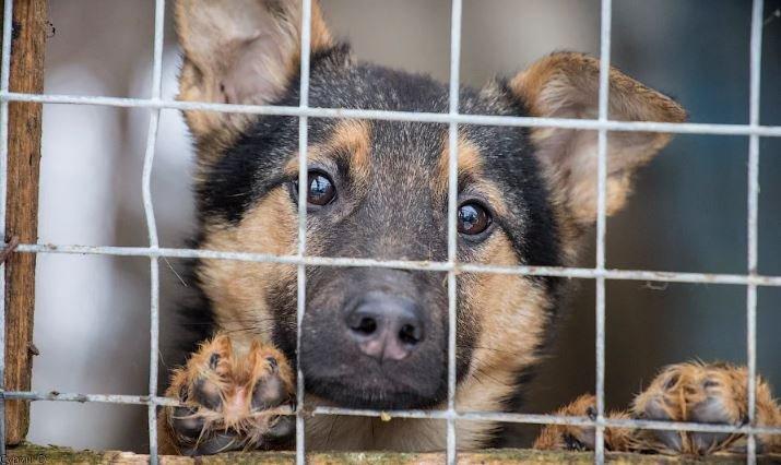 В Ивацевичах откроют приют для бездомных животных