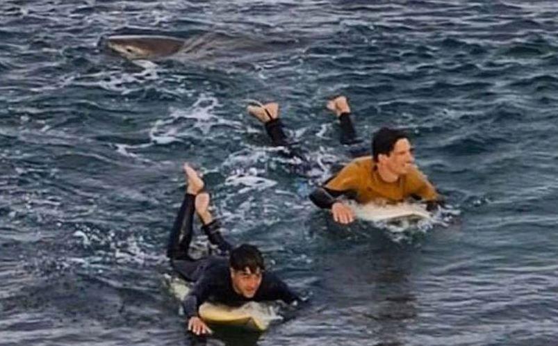 Серфингист погиб от акулы на закрытом из-за коронавируса пляже