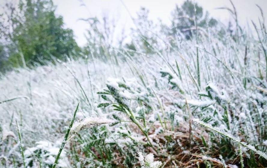 В Беларуси 12 мая выпал снег