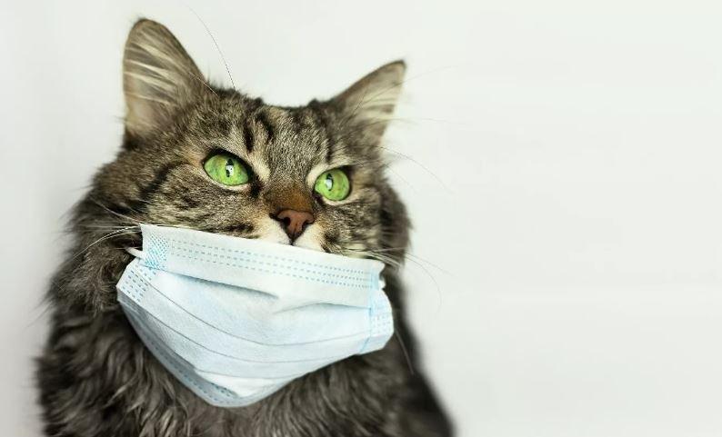 В России зарегистрирована вакцина от коронавируса COVID-19 для животных