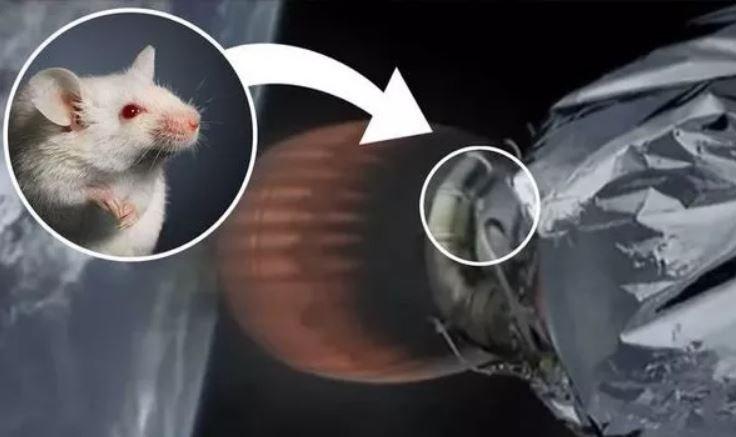 Мышь ползает по соплу ракеты Элона Маска в космосе?