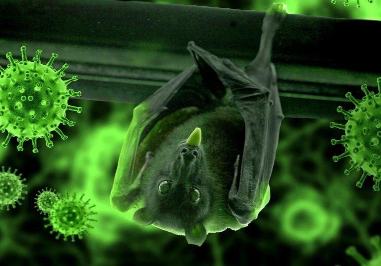 ВОЗ назвала наиболее вероятную версию возникновения коронавируса COVID-19