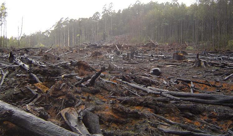 Слухи о беспощадной вырубке лесов в Беларуси не подтвердились