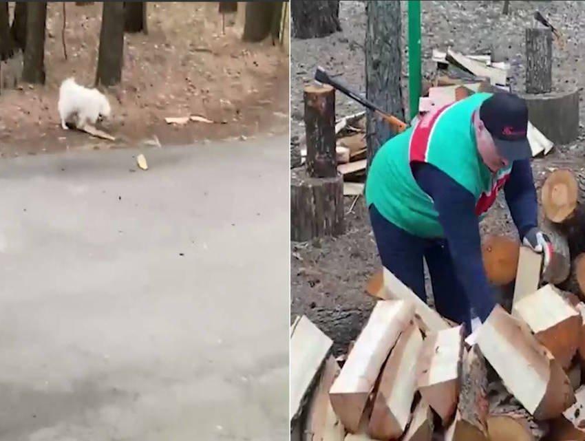 Лукашенко отметил 1 мая рубкой дров