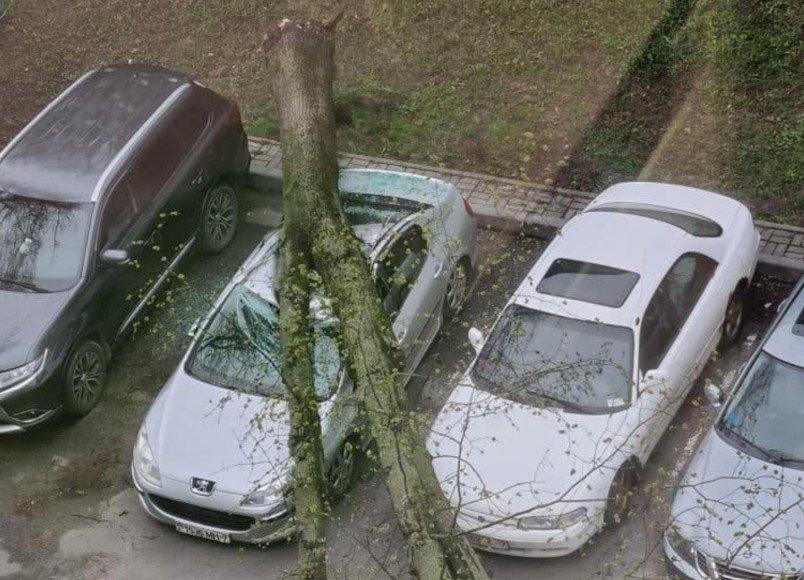 В Минске упали деревья на территории двух детских садов