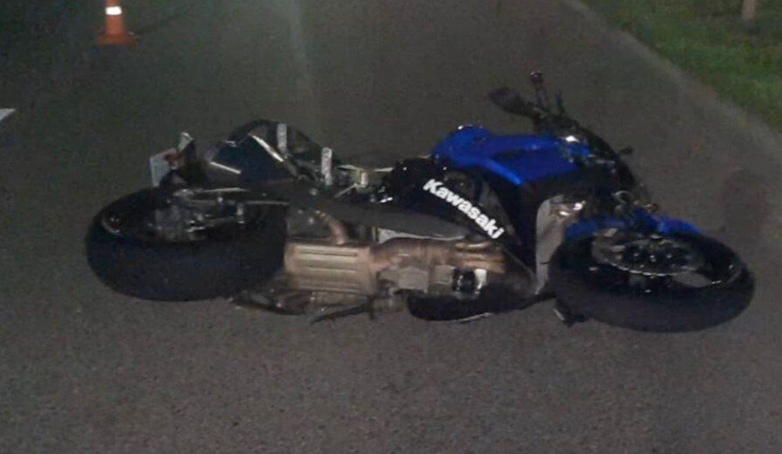 В Могилеве мотоциклист врезался в лося и погиб