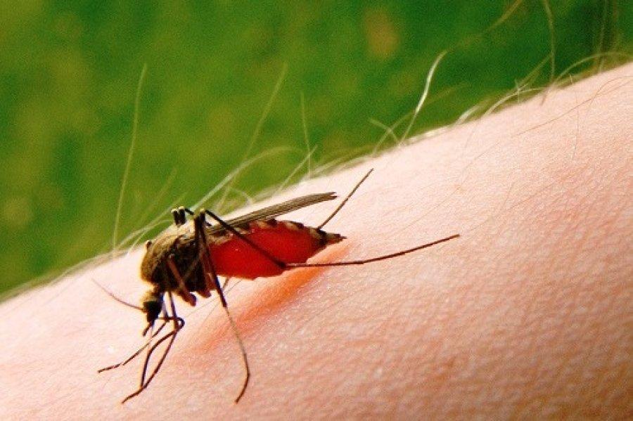Названа группа крови, которую комары предпочитают более всего