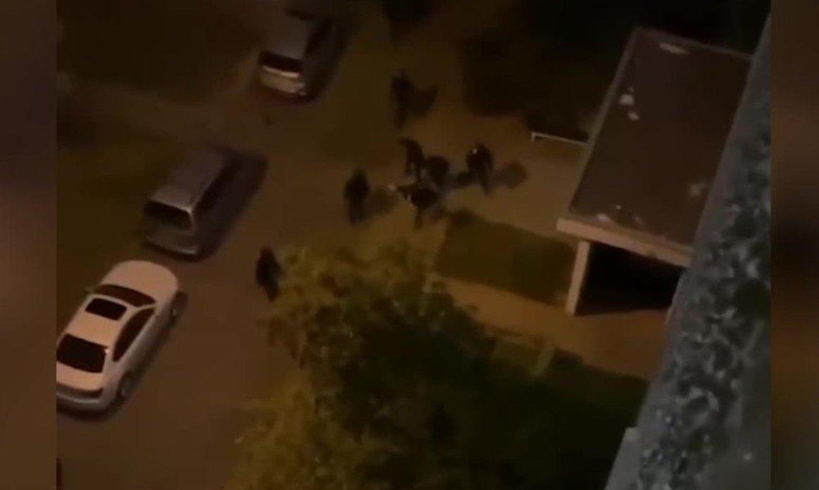В Беларуси задержали сбросивших дверь на милиционеров минчан