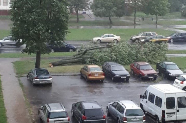 Сильный ветер стал причиной падения деревьев в Минске и области
