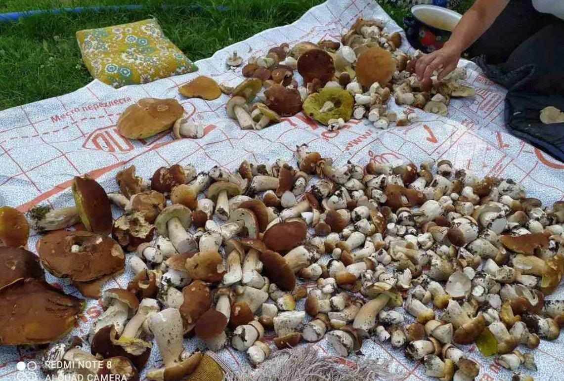 Жительницы Ганцевичей собрали почти 700 боровиков за два дня