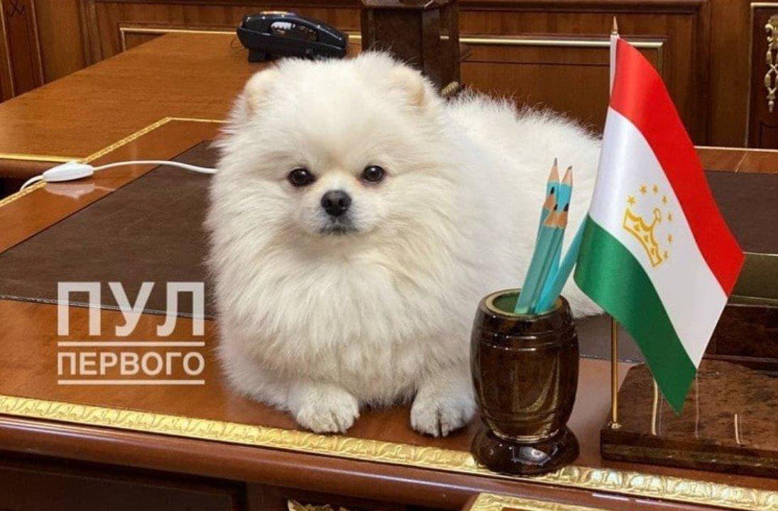 Лукашенко взял на саммит ОДКБ сына Николая и шпица Умку