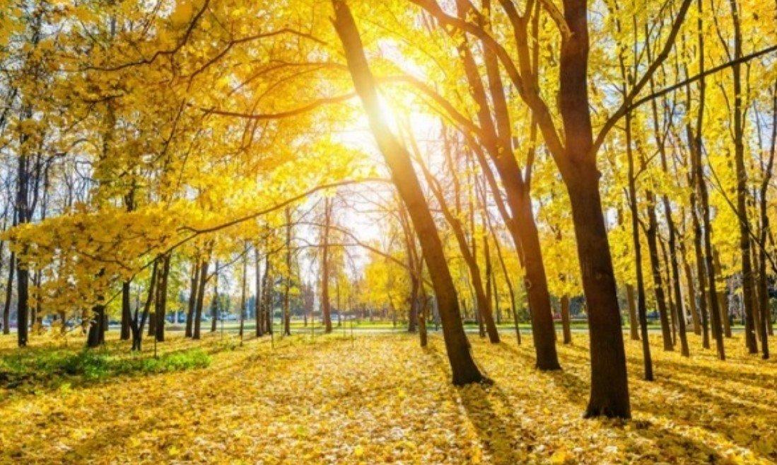 Синоптик Дмитрий Рябов рассказал о погоде в Беларуси на начало октября
